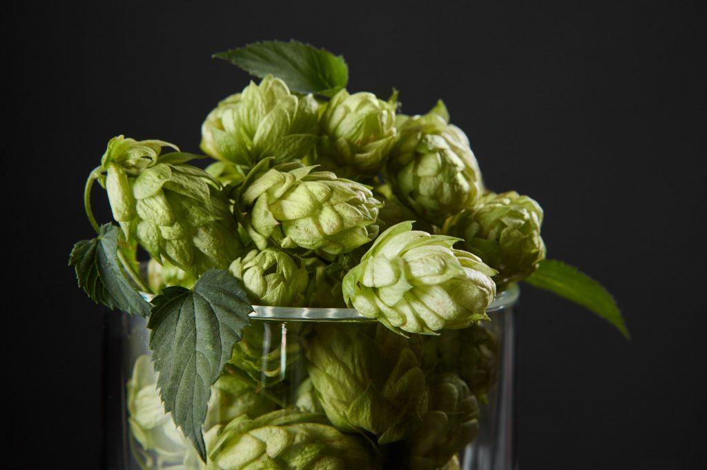 El papel del lúpulo y el amargor en la cerveza. Cervezas amargas.